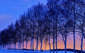 Обои небо, закат, зима, деревья, снег, дорога