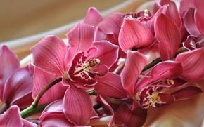Картинка ветка, экзотика, орхидея