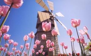 Картинка поле, лето, небо, цветы, розовый, голубой, мельница, тюльпаны