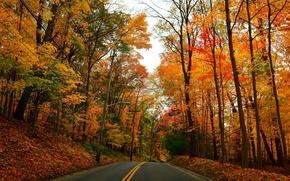 Картинка дорога, осень, лес, деревья, парк, фонари