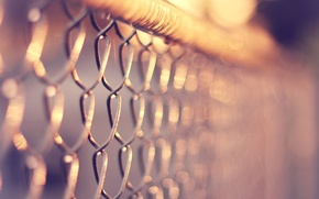 Обои макро, тепло, сетка, забор, рабица