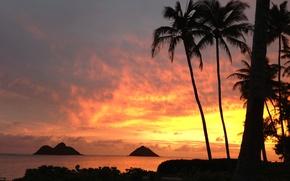 Обои море, пальмы, закат, пейзаж, природа