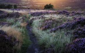 Картинка grass, trees, Flowers, sun, trail, lavender