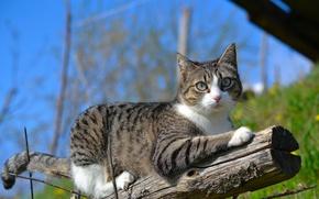 Картинка кошка, кот, природа, ветка, бревно