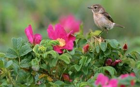 Обои Цветы, Листья, Птица