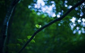 Картинка ветка, лист, свет, небо, зеленый, природа, ветви, листья, боке, дерево, листва, зелень, ствол, green, блики