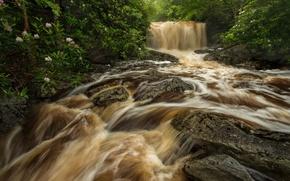 Картинка лес, река, камни, водопад, поток, кусты, West Virginia, рододендроны, Западная Виргиния, Big Run river