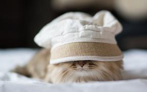 Картинка кошка, Ben Torode, спряталась, Daisy, панама, Benjamin Torode, лежа