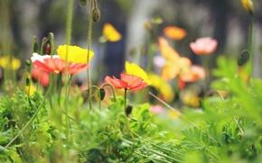 Картинка цветок, листья, макро, цветы, желтый, красный, фон, widescreen, обои, wallpaper, листочки, цветочки, широкоформатные, flowers, background, …