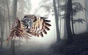 Картинка полет, сова, крылья