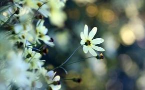 Обои нежность, макро, блики, растения, белый, цветок