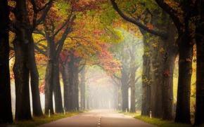 Картинка дорога, осень, туман, перспектива