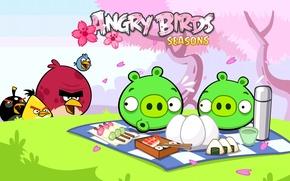 Обои птицы, яйца, Игра, пикник, свиньи, злые птицы, angry birds seasons