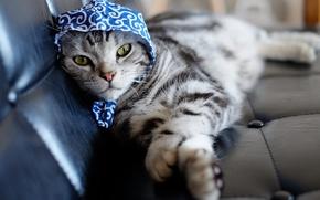 Картинка кошка, взгляд, платок