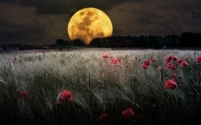 Картинка поле, цветы, природа, луна, иаки