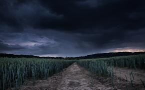 Картинка поле, буря, затишье