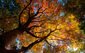 Картинка осень, деревья, природа, листва, кроны