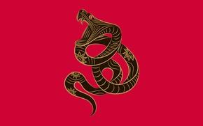 Обои змея, зодиак, Zune