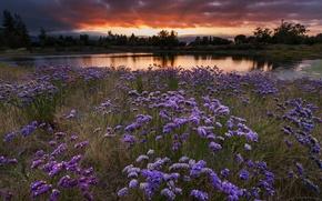 Картинка поле, пейзаж, закат, цветы, вечер, луг, водоем, обои от lolita777