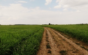 Картинка дорога, поле, лето, трава, природа, обои