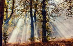 Картинка листва, лучи, свет, природа, деревья, осень, лес
