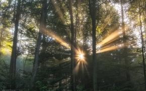 Картинка лес, солнце, свет, деревья, природа