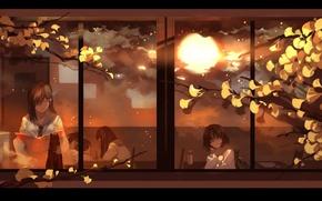 Картинка солнце, ветки, окно, класс, школа, школьницы, черный кот