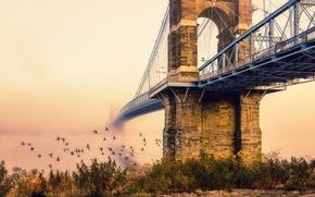 Обои птицы, мост, город, туман, утро