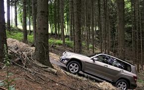 Обои внедорожник, Авто, деревья, лес