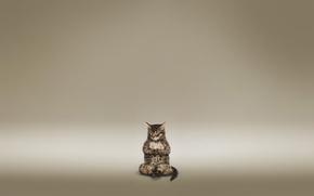 Картинка кот, медитация, коричневый