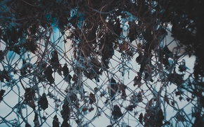 Картинка забор, Зима, мороз