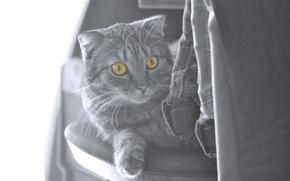 Картинка кошки, cat, черно - белый