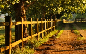 Картинка light, road, trees, fence, golden morning