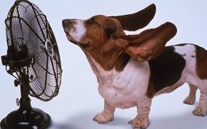 Картинка животные, собака, вентилятор