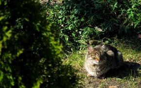 Картинка зелень, кот, взгляд, серый, смотрит