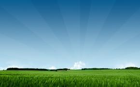 Обои зелёное, поле, природа