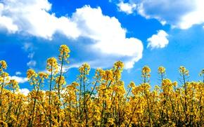 Картинка sky, flowers, clouds, sunny