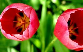 Картинка макро, цветы, природа, flowers