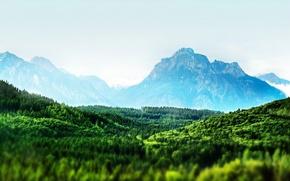 Картинка лес, деревья, Горы