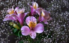Картинка цветы, розовые, Flowers, pink