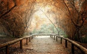 Картинка листья, деревья, природа, фон, дерево, widescreen, обои, wallpaper, тропинка, широкоформатные, background, полноэкранные, HD wallpapers, широкоэкранные, …