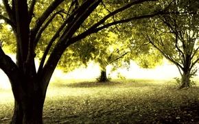 Обои солнце, деревья, осень, лес
