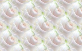 Картинка цветок, фон, роза, текстура, белая роза