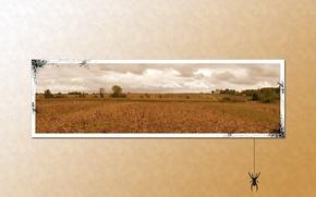 Обои фото, поле, паук