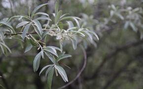 Картинка зелень, листья, макро, деревья, ветки, Природа, растения