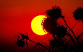 Картинка небо, солнце, макро, закат, растение, силуэт