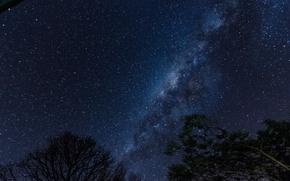 Картинка космос, звезды, деревья, ночь, пространство, млечный путь, силуэты
