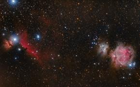 Обои Конская Голова, звезды, космос