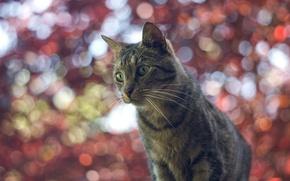 Обои кошка, блики, боке, фон, кот
