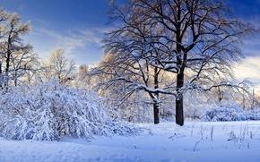 Картинка зима, снег, деревья, природа.